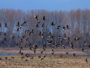 Aves volando