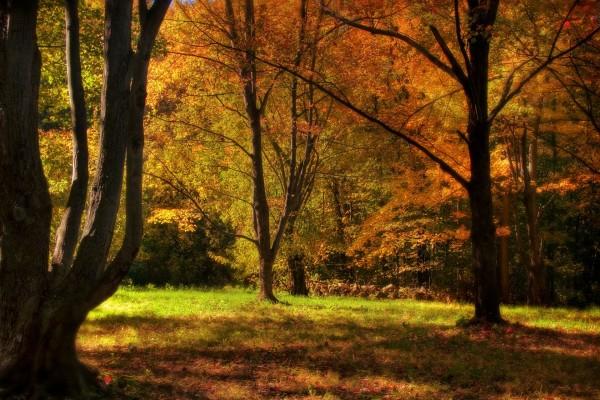 Árboles otoñales en el interior del bosque