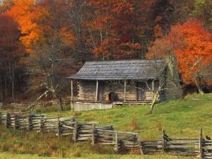 Cabaña de madera entre árboles