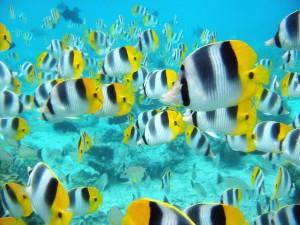 Postal: Banco de peces tropicales