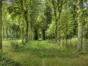 Camino verde entre árboles
