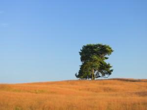 Árbol verde y la hierba anaranjada