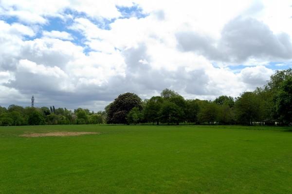 Árboles verdes y nubes blancas