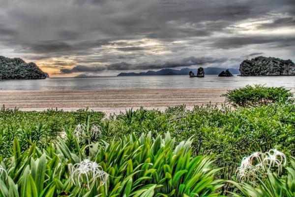 Plantas cerca de la playa