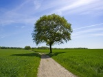 La sombra del árbol sobre el camino