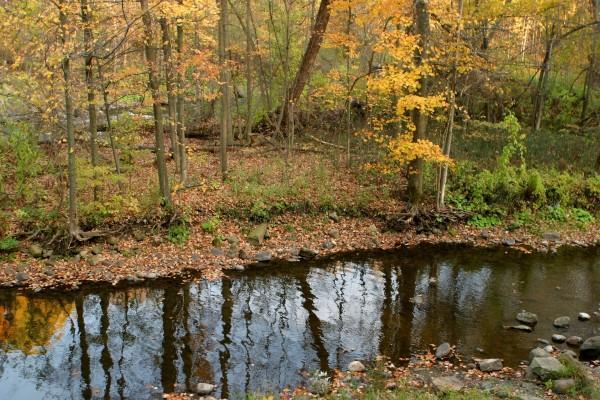 Un pequeño río entre árboles otoñales