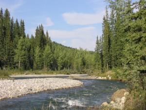 Río en un lugar llano