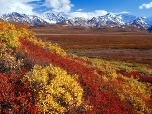 Postal: Los colores del otoño y las grandes montañas
