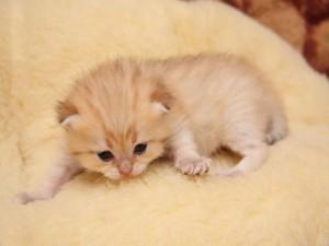 Postal: Pequeño gatito
