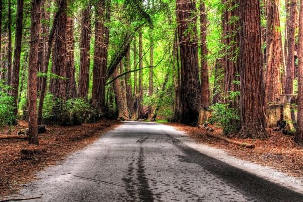 Carretera a través del bosque