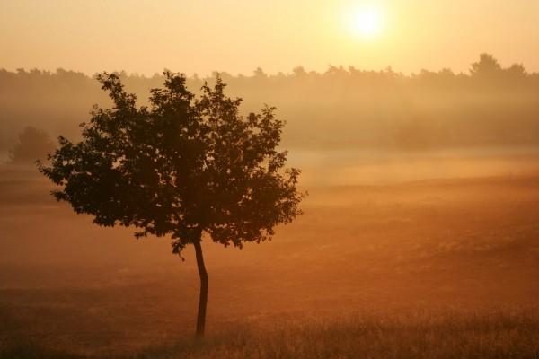 Árbol al amanecer