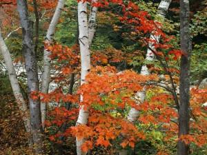 Árboles con las hojas otoñales