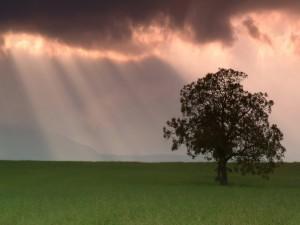 Postal: Árbol y luz solar