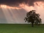 Árbol y luz solar