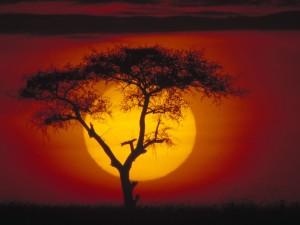Acacia y el sol
