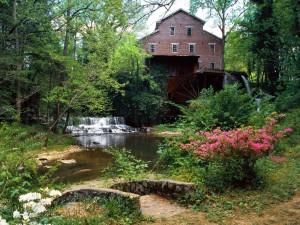 Postal: Plantas con bonitas flores en la orilla del río