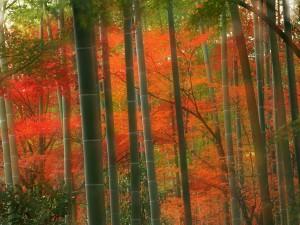 Postal: Bosque de bambú