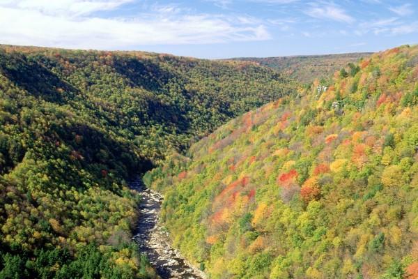 Árboles con los colores del otoño