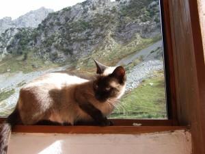 Postal: Gato en Caín (León, España)