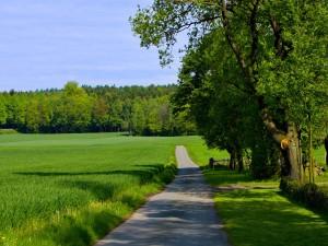Pequeña carretera en un lugar con mucho verde