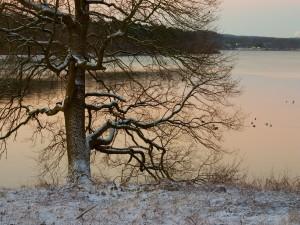 Nieve en las ramas del árbol