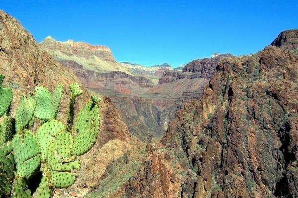 Cactus en las montañas