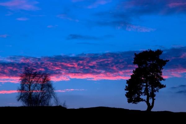 Bonito cielo y árboles en la oscuridad