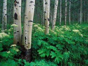 Postal: Grandes plantas verdes entre los árboles
