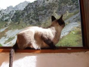 Gato mirando a las montañas