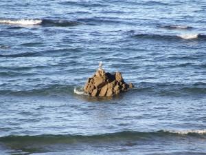 Postal: Gaviota en una roca del mar