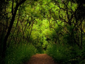 Camino en la naturaleza