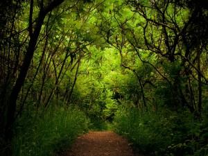 Postal: Camino en la naturaleza