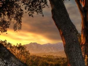 Postal: Viendo el amanecer junto al árbol
