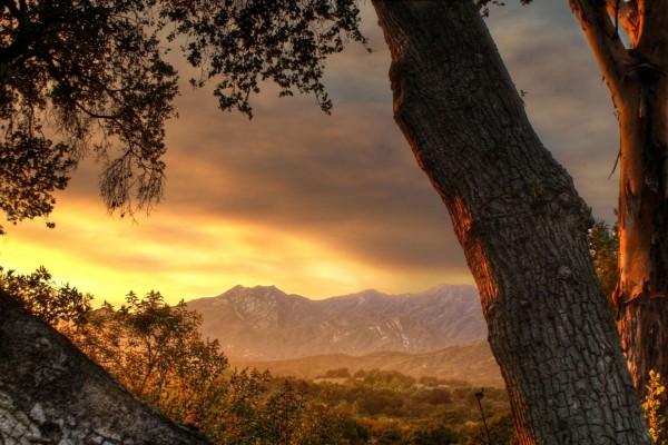 Viendo el amanecer junto al árbol