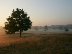 Algo de niebla entre los árboles