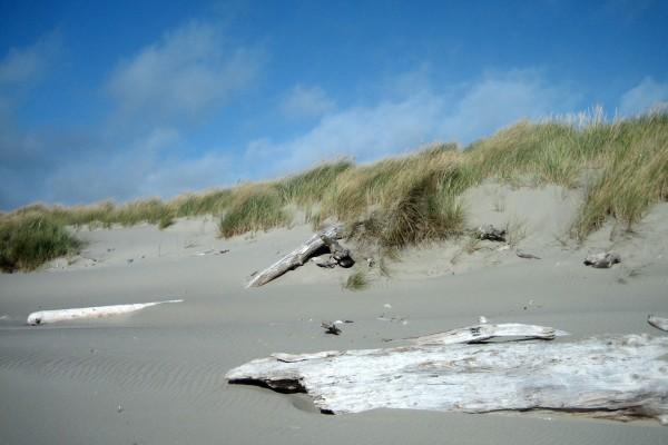 Troncos en la arena de la playa