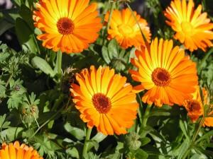 Postal: Flores naranjas iluminadas por el sol