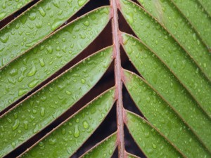Hojas en la rama con gotas de agua