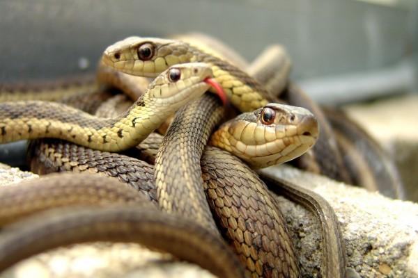 Nido de serpientes
