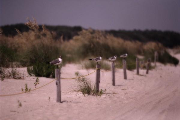 Cada pájaro en un palo