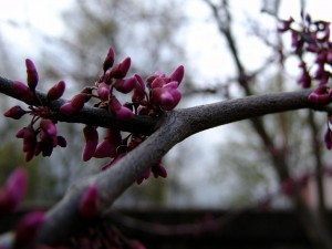 Postal: Flores brotando en la rama