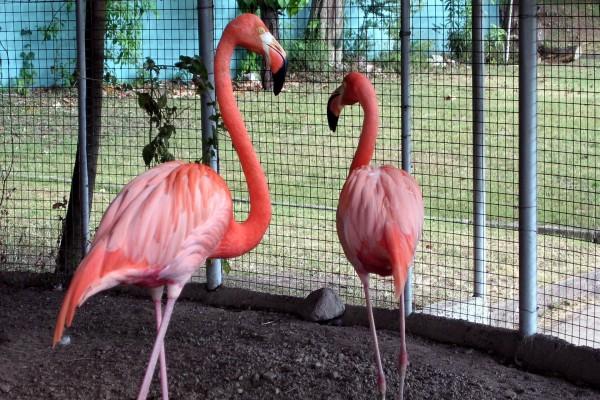 Flamencos en una jaula