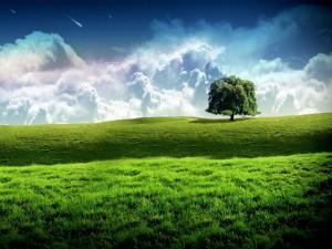 Árbol solitario en un prado verde