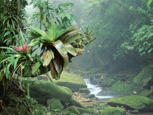 Riachuelo entre la vegetación