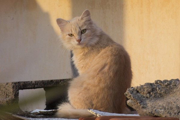 Un bonito gato callejero