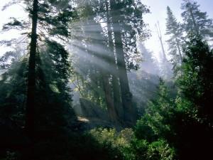 Luz en el bosque