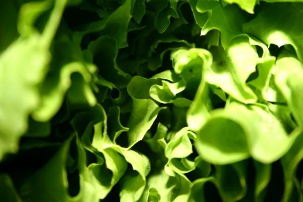 Conjunto de hojas verdes
