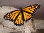 Mariposa sobre un tronco