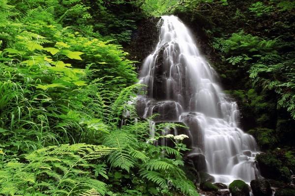 Cascada vertical entre vegetación verde