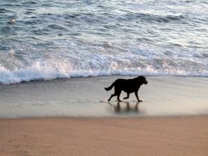 Postal: Perro en la orilla del mar